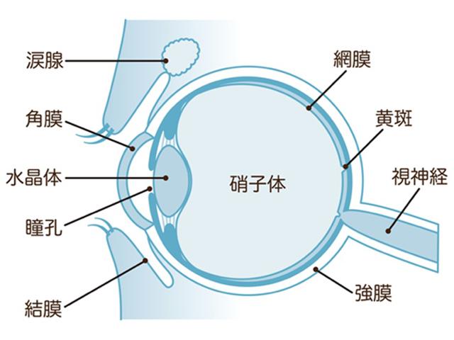 網膜硝子体